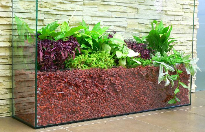 живые растения в офис