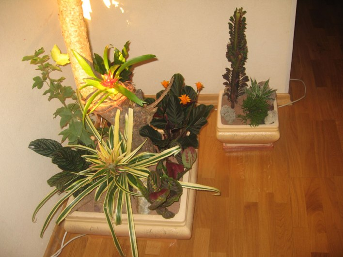озеленение квартир в москве