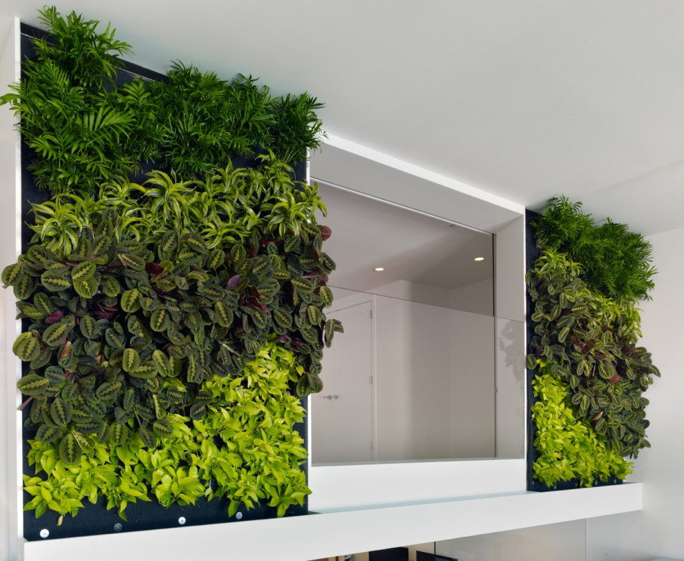 Зеленая стена из растений в квартире своими руками