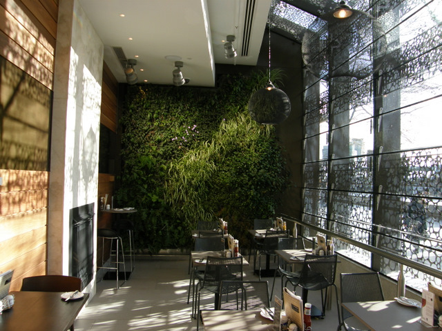 стены из растений