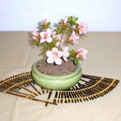 цветущий бонсай купить