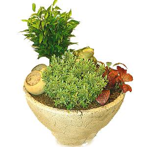 растение поставить на пол