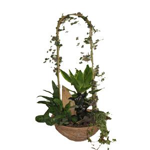 купить растения в квартиру
