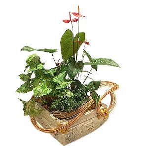 композиция из растений в офис