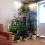 Озеленение квартир