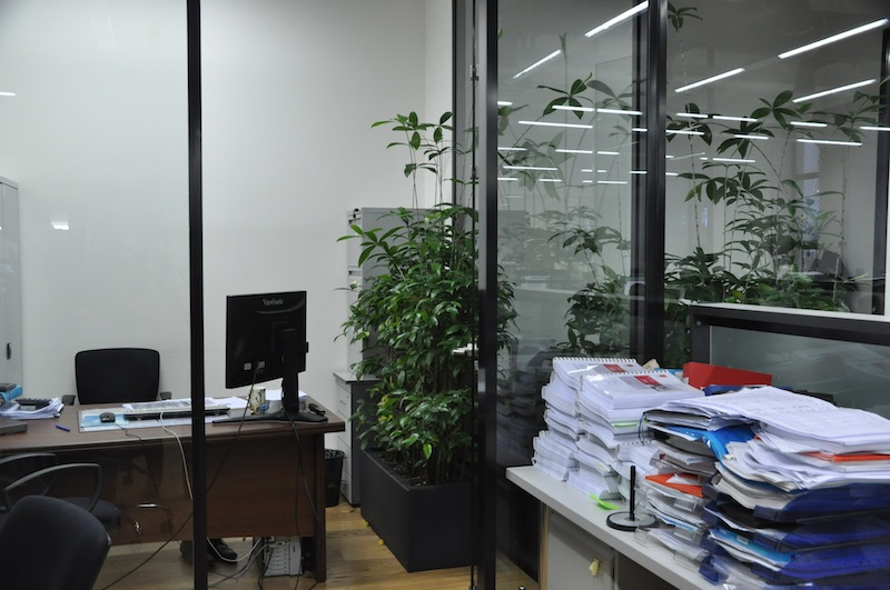 ozelenenie ofisa